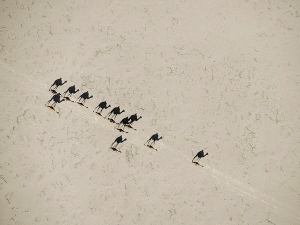 camels-aerial-johns_31414_600x450